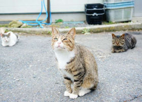 Tashirojima Island: Visiting Japan's Cuddly Cat Island Watched Over by the Cat God