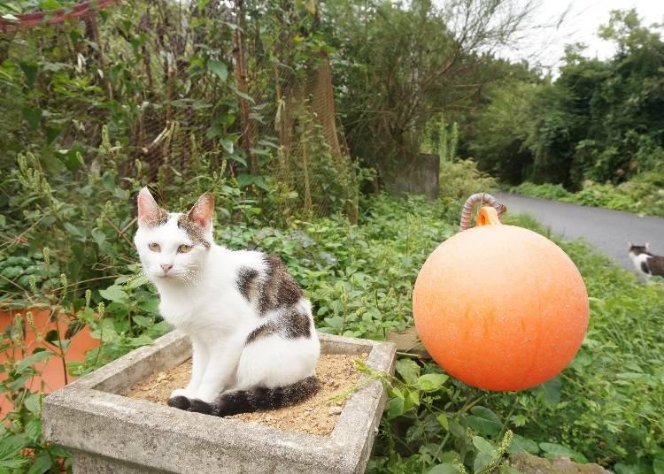 Enjoy Tashirojima Island: House rules while visiting Cat Island in Japan