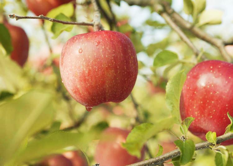 10月~11月が旬!青森の絶品りんごスイーツ&グルメ5つ