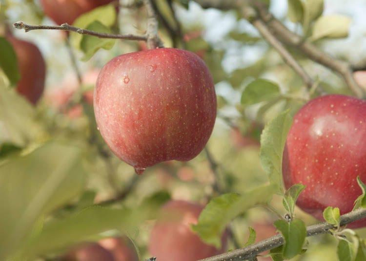 青森といえば、リンゴの名産地