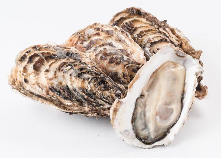 被稱為「海之牛奶」的松島牡蠣