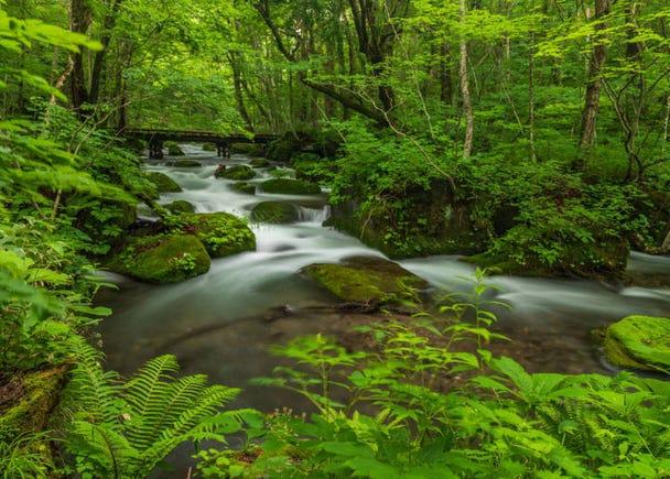 4. Oirase Mountain Stream (Aomori Prefecture)