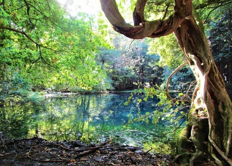 11. 마루이케사마 연못 (야마가타)