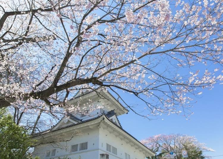 跟著伊達政宗的腳步遊覽仙台吧
