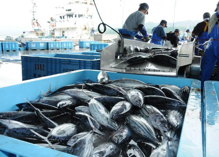 The Delicious Seafood of Miyagi!