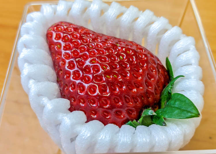 What it's like to eat a super expensive Japanese strawberry【Taste Test】 - LIVE JAPAN