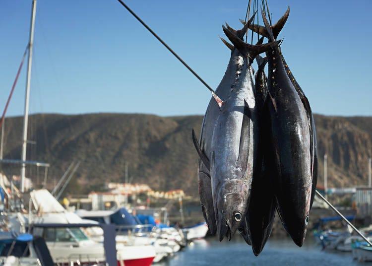 Aomori City's world-famous tuna