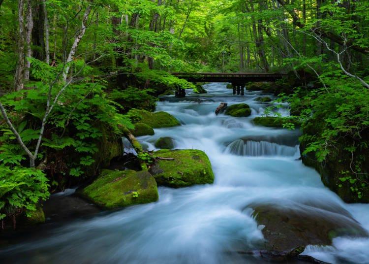 由各個季節的氣候與地形,創造出屬於青森縣的美食與風景