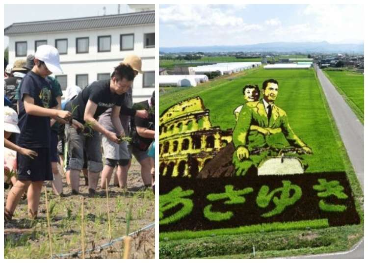 Inakadate Japan: This Rural Japanese Village Grows Epic Rice Paddy Art to Attract Tourists!
