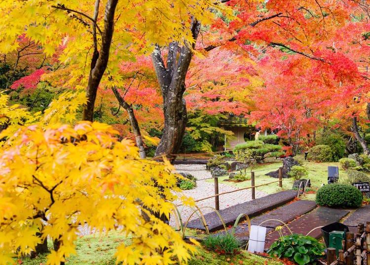 宮城賞楓景點②圓通院:清靜的寺院淨地換上豔麗的彩衣
