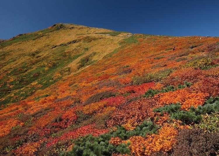 宮城賞楓景點③栗駒山:被稱之為「神之地毯」的美麗絕景