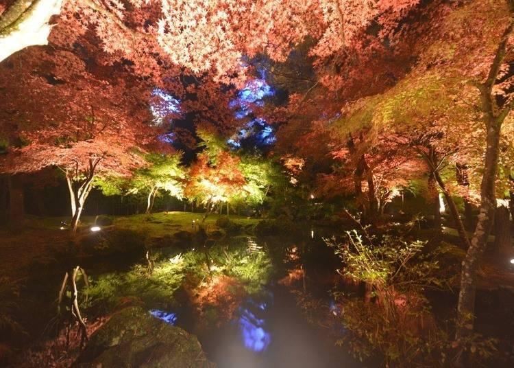 宮城賞楓景點④天守閣自然公園:一片夢幻般的世界