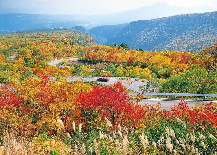 宮城賞楓景點⑤藏王生態線公路:滿山秋色的山岳道路
