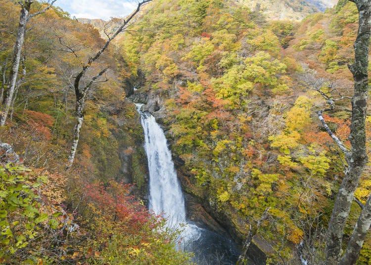 宮城賞楓景點⑥秋保大瀑布:楓葉與瀑布的完美結合!