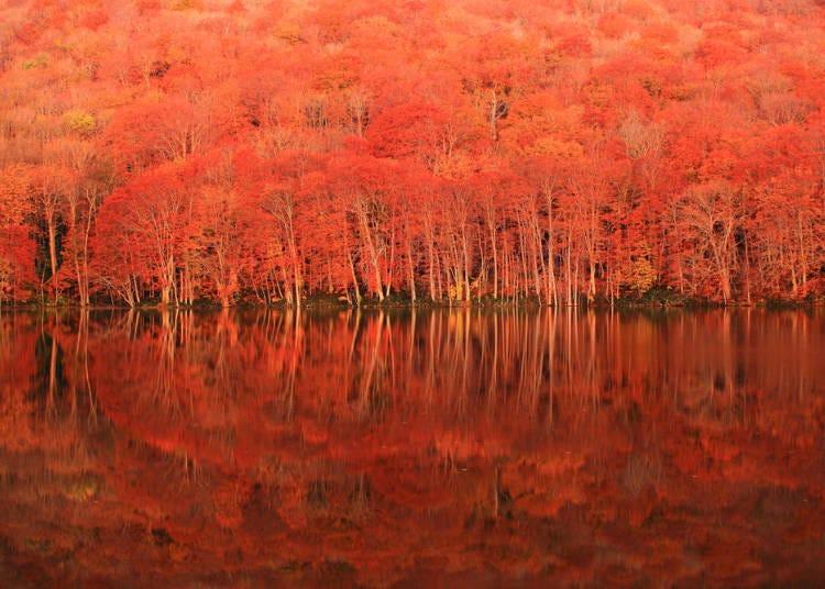 1.湖面に浮かぶ燃えるような紅葉【蔦沼】