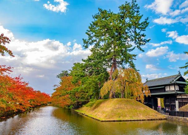 青森賞楓景點⑧弘前公園:黑夜中浮現出夢幻般的楓葉