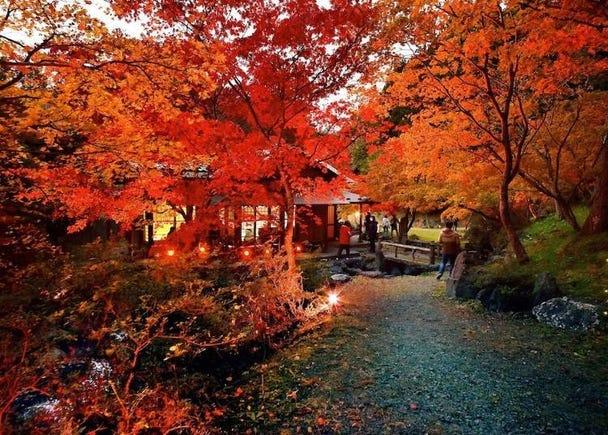 青森賞楓景點⑩南鄉大杜鵑的森林回聲Land:隱藏版楓葉名勝景點