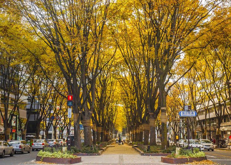 仙台旅行の前に知っておきたい!秋(9月10月11月)の天気・気温&服装