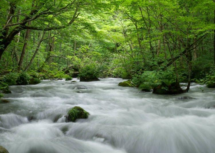 宛如世外桃源的自然仙境「奧入瀨溪流」