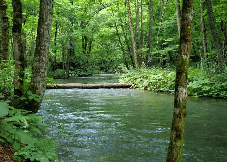 奧入瀨溪流的四季景色