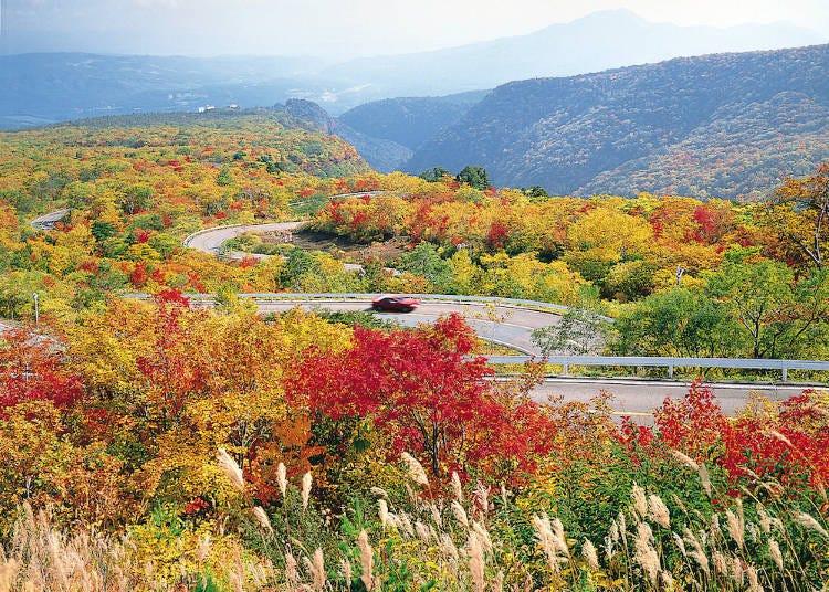 2. Zao Echo Line: Autumn sky and leaves