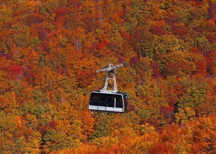 1.空から眺める秋色のグラデーション【蔵王ロープウェイ】