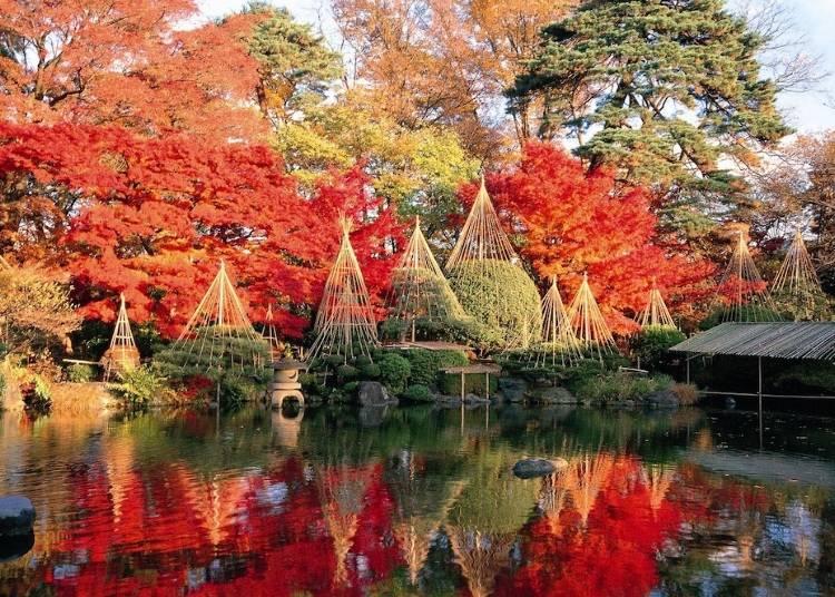 7.赤く染め上げられた日本庭園【もみじ公園】