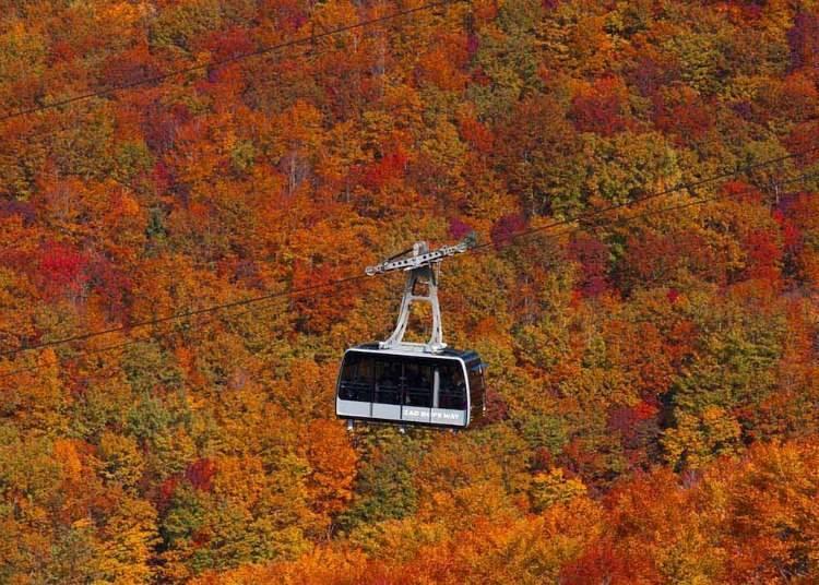 山形紅葉景點①從空中眺望秋色的漸層「藏王空中纜車」