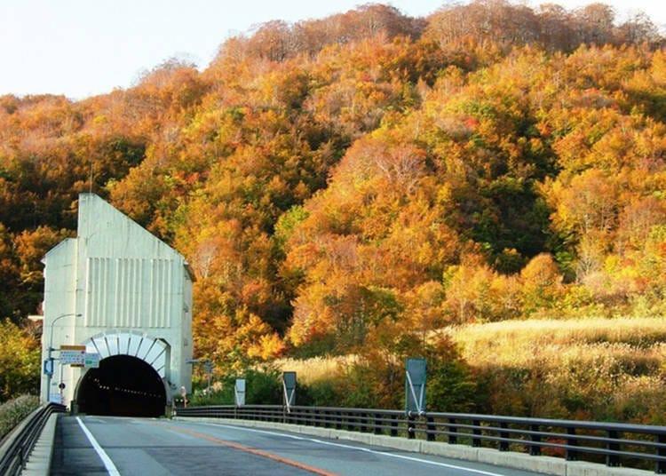 山形紅葉景點⑤穿過隧道後,就是絕美景色「月山花笠路」