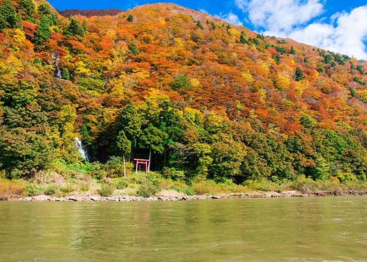 山形紅葉景點⑥搭乘遊船近距離的感受楓葉「最上峽」