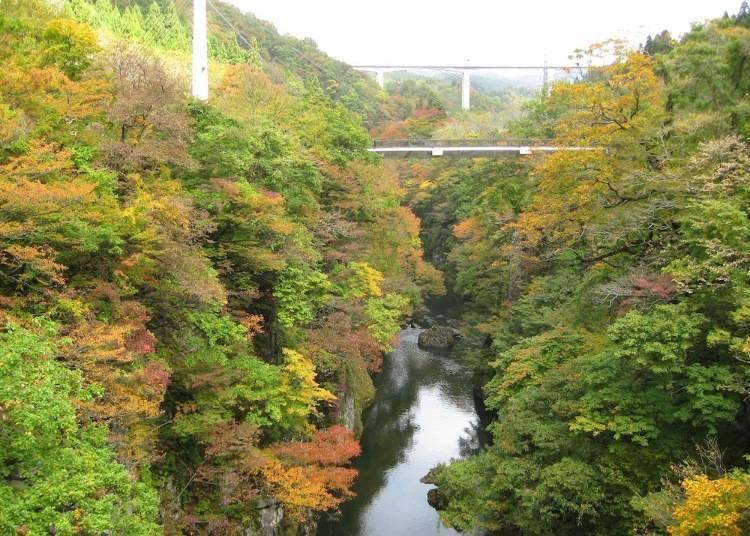 山形紅葉景點⑩從吊橋眺望溪谷的楓葉「梵字川溪谷」