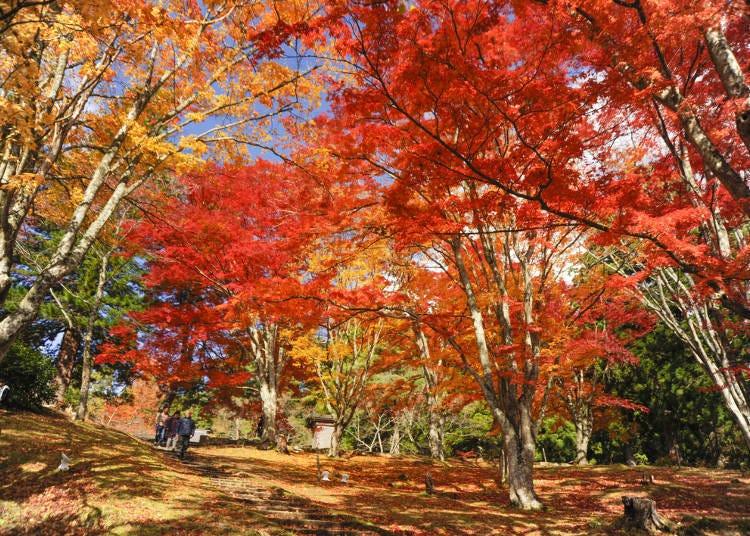 5. Hanitsu-jinja: Admire the red maple carpet
