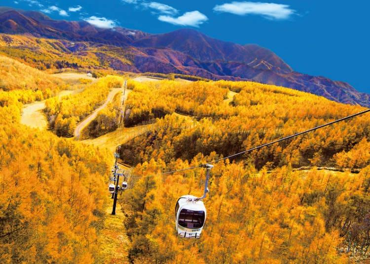 福島紅葉景點③絕美景色的空中散步「裏磐梯紅葉空中纜車」