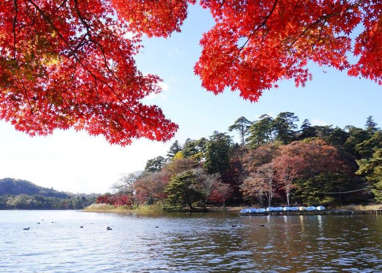 福島紅葉景點⑨擁有17個名勝景點的「南湖公園」