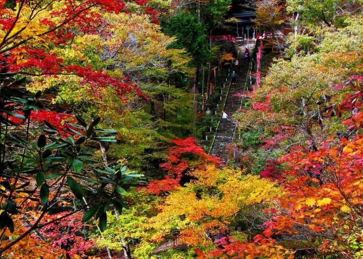 福島紅葉景點⑩通往聖地的石階與楓葉「山本不動尊」