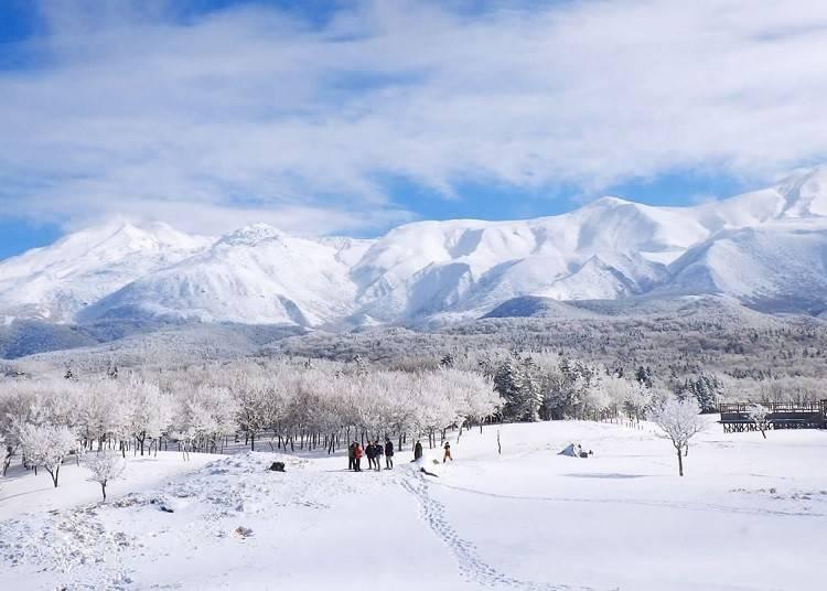 知床の楽しみ方3 冬だけの絶景を楽しめる「知床五湖スノーシューイング」
