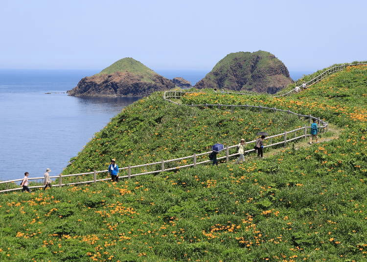 A microcosm of Japan!? What kind of place is Sadogashima?