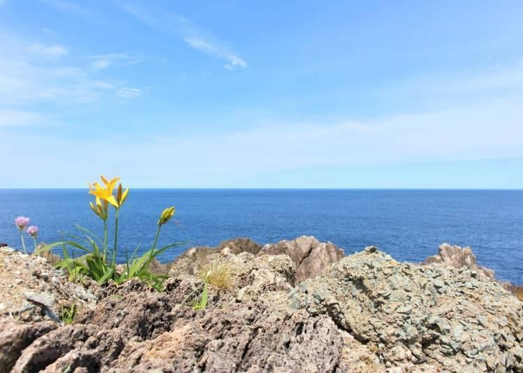 盡情地享受佐渡島的魅力吧!