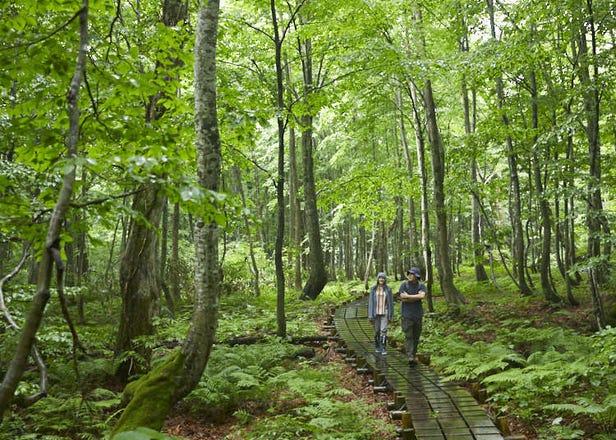 東京から気軽にアクセスできる東北秋田・白神山地、一泊二日ツアー!見どころ、グルメ、アクセス、周遊スポットを徹底紹介