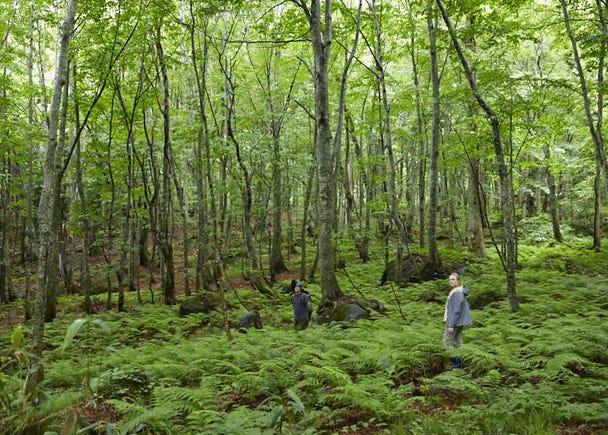 Step inside a mysterious fantasy-like world of lush greenery!