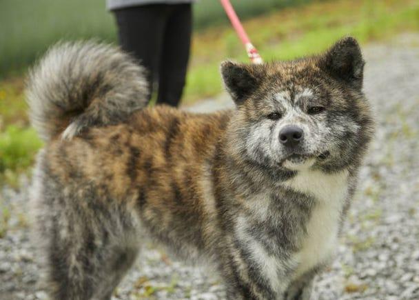 Day 2: Head to popular Shirakami-Sanchi attraction Juniko (Twelve Lakes) to pet some Akita dogs!