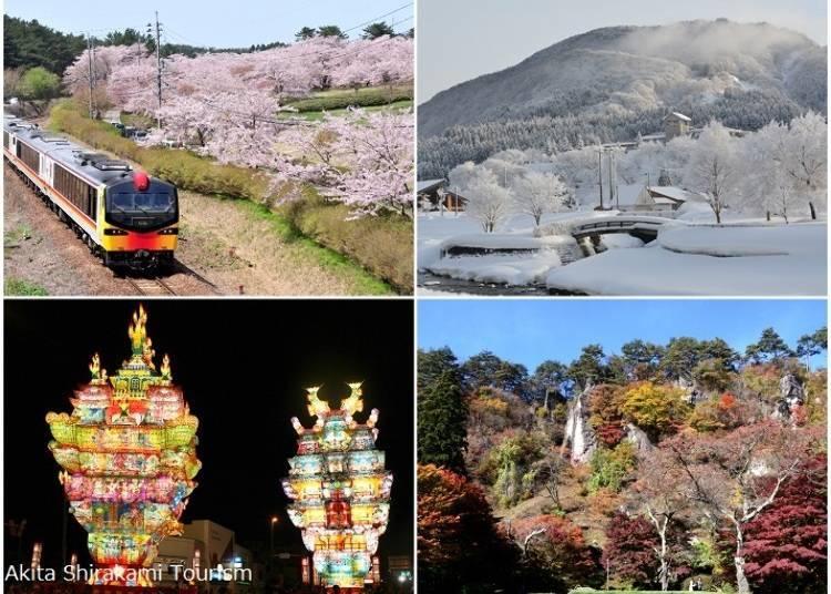 More About Shirakami-Sanchi in the Tohoku Region