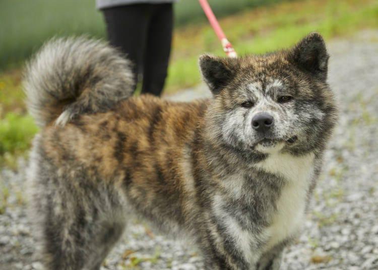 ■2日目:秋田犬とのふれあい体験~白神山地の人気スポット「十二湖」へ
