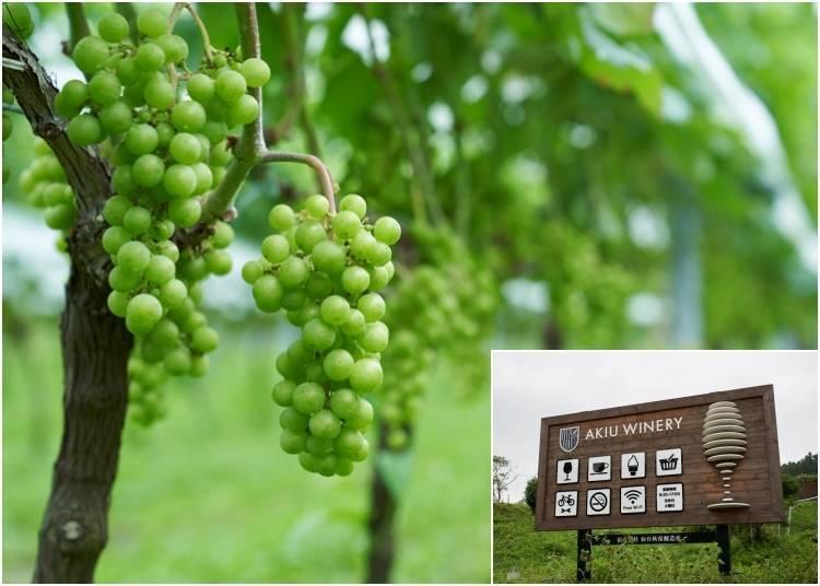 Akiu Winery