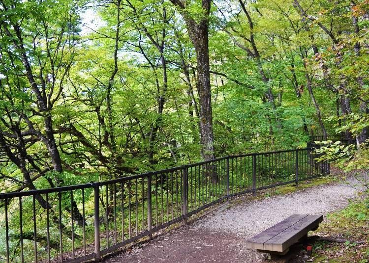 作並溫泉1日行程⑥眺望景點「鳳鳴四十八瀑布」