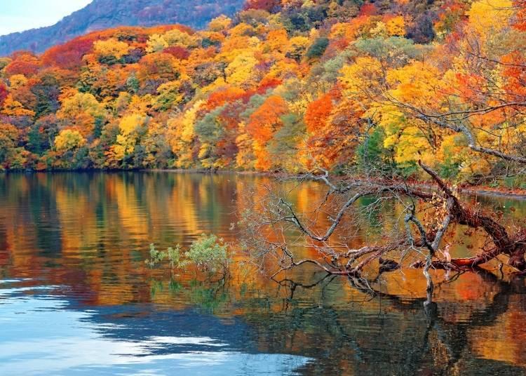 ■楓葉也不能錯過!近「十和田湖」、「奧入瀨溪流」的飯店3選
