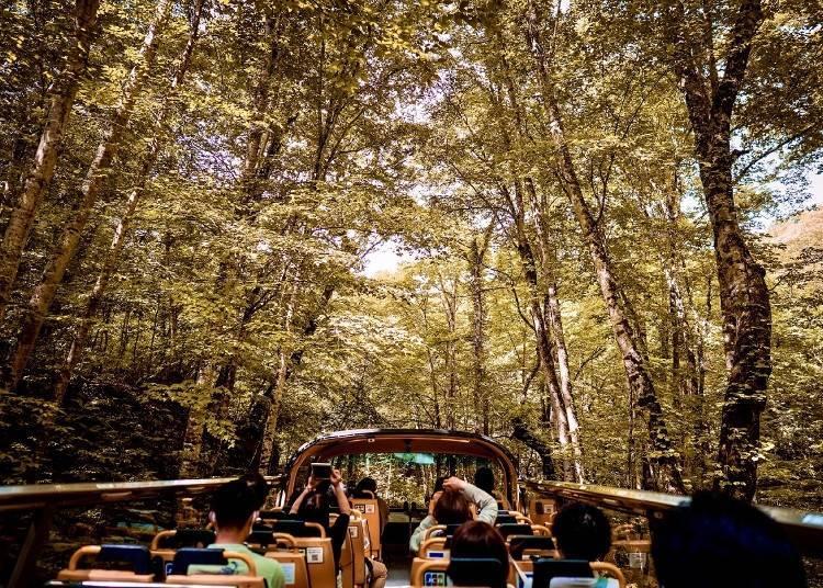 「紅葉雙層露天巴士豪華遊」觀光行程