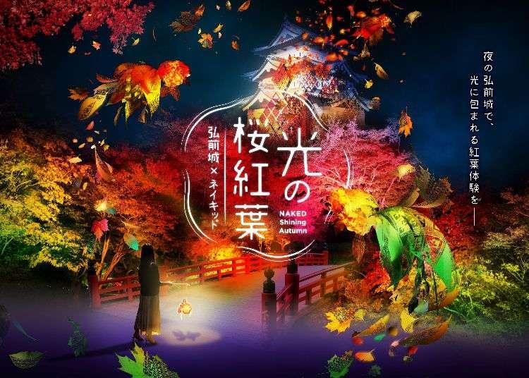 青森弘前城不只櫻花可看!秋季限定的「光之櫻紅葉」光雕展現正舉辦中