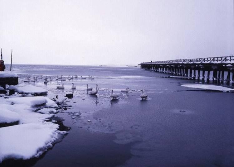 4. Lake Jusanko (Goshogawara City)