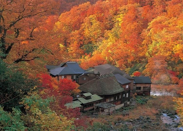 2 : 츠루노유 온천(아키타현 센보쿠시)